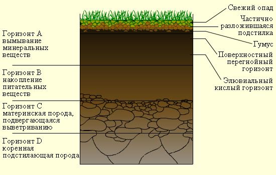 Схема глинистого грунта